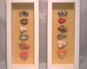 Natural Sea Shell Feature Frame Picture Original Artwork Shadow Box Home Decor