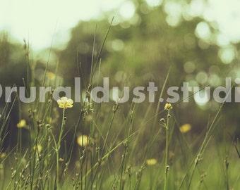 A Yellow Summer
