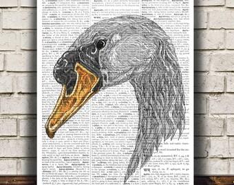 Animal print Mute swan poster Bird print Ornithology art RTA700