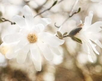 White Flower Photography, Spring Floral Print, Cream Wall Art, Nursery Decor, Dreamy White Pale Decor, Shabby Chic
