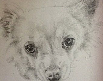 Drawing of your pet after a photo