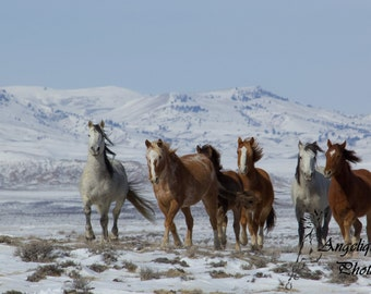 Mustangs on the Move - 12x16 Matted Fine Art Print