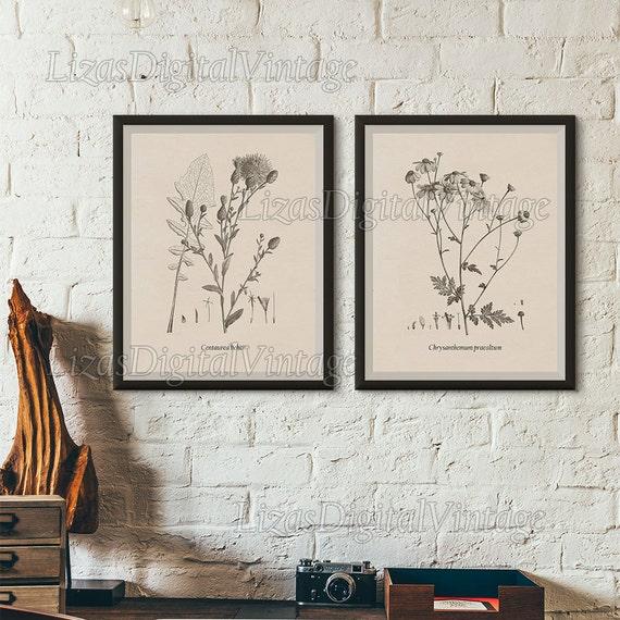 Printable set, Set of 2 wall art, Vintage flower prints, Flower art, Flower print, Chrysanthemum, Cornflower, Flower illustration, Art, JPG