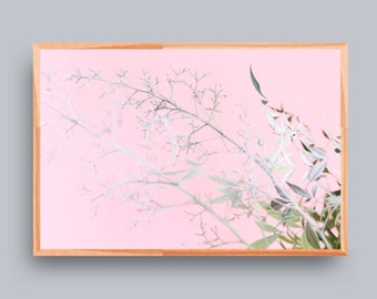 Large Photograph, Modern Still Life Photography, Art, Wall Decor, Whites, Pinks, Color, Colour
