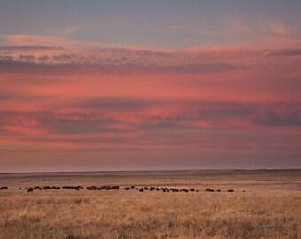 Tallgrass Prairie Sunset