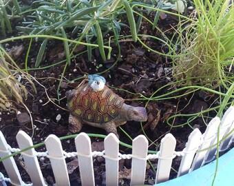 Aadorable Bird Riding A Turtle
