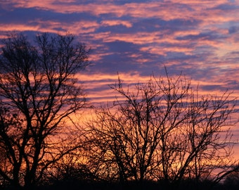Sunrise with wintry trees