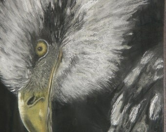 Views of a bird of prey, pastel, chalk, cardboard, glass, framed, Eagle, Hawk, bird, mural, painting,.