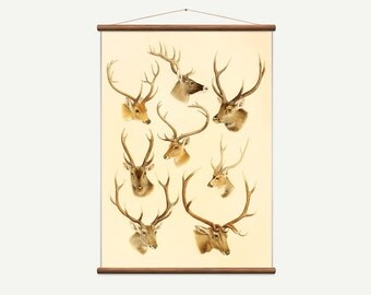 Vintage pull down chart of a Deer. High Quality Handmade vintage art