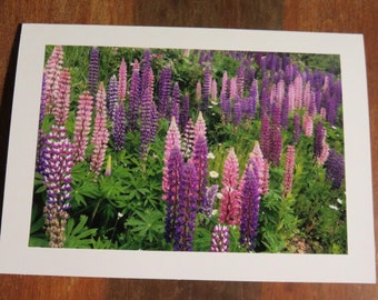 Wild Lupines. Photo greeting / note card. Blank inside.