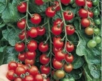 Tomato RED CHERRY Lycopersicon esculentum <0.3 g, 100 seeds >