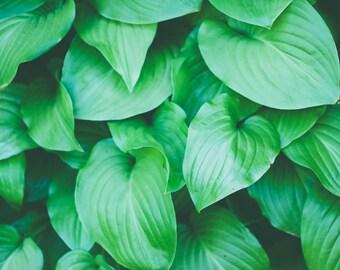 Leaves - Leaves Photo - Nature Digital Photo - Green - Green Photo - Digital Photo - Digital Download - Instant Download - JPG