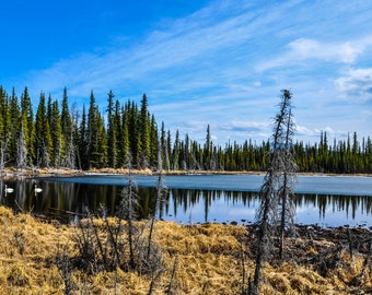 Landscape Photography, Instant Digital Download, Yukon, Color Photography