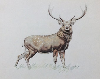 The stag an image made entirely of me minuscule dots