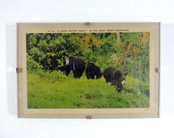 Framed vintage postcard bears in the smoky mountains