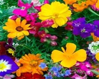 Balcony Wildflowers Flower Seeds/Annual  75+