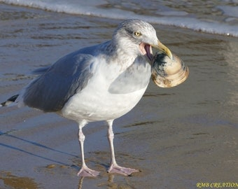 Seagull and the seashell
