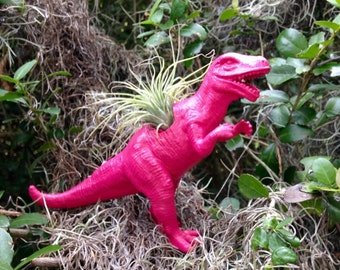 Pink T Rex Dinosaur / Air Plant  Ionantha /Planter / Desk Decor / Office Accessory /  Office Decor / Home Decor