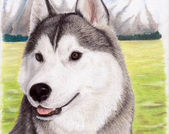 Dog portrait-Original-Pastel pencil drawing-Husky drawing-Dog art-Husky decor