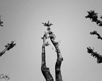 Another world, A1, poster, nature/tree/black&white photo