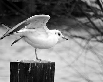 Photograph the flight of a Seagull / The take-off of the seagull Fine Art Photography / Printed Photography
