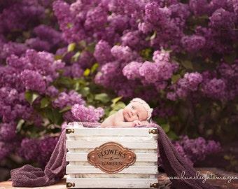 Newborn Digital Backdrop - Photography Background / Prop - Lilac Prop (Set of 2)