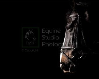 Horse Portrait 1, Fine Art Print, Equine Photography