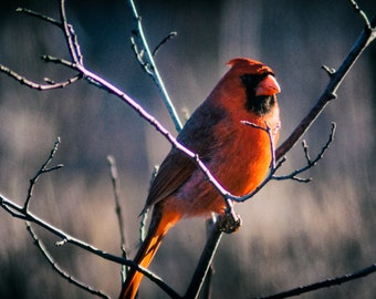 Birds in Tree 4