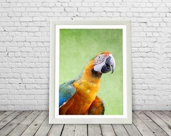 Tropical Macaw Bird Print, Paradise, Rainforest birds, Brazil, Green, modern, macaw posters