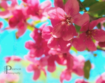 Pink Flowers on Branches in Blue Sky Print, Art Nature Photography, Wall Art, Home Decor, Pink Wall Art, Floral Photography, Nature Prints