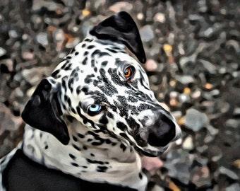 Catahoula Leopard Dog - Print or Canvas