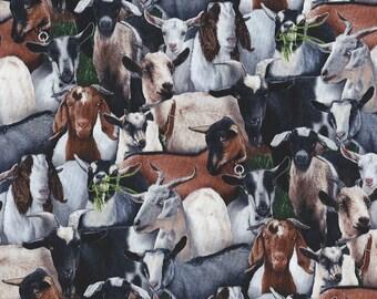 Goats of many Breeds Elisabeth Studio