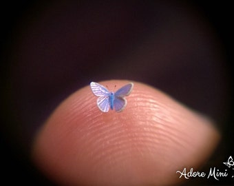 "Sale- Common Blue, Miniature Butterfly, Polyommatus Icarus, Dollhouse Scale, 1:12, 1/8"" Wingspan, 3 mm, Micro, AdoreMini"