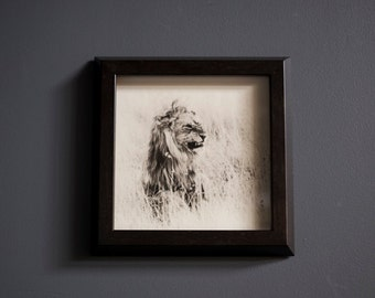 Lion // African Wildlife // Framed Photograph + Wall Decor