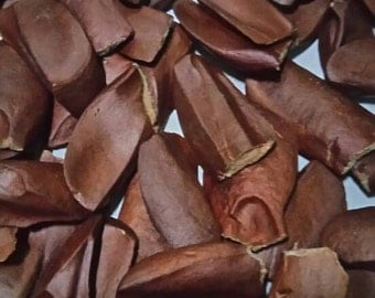Indonesia natural herbal dried Mahogany Seeds 1000 gram
