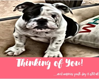 "English Bulldog Postcards. English Bullie ""Thinking of You"" Cards. English Bulldog Art."