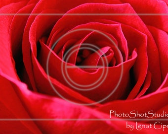 Red Rose Printable Photography Instant Download Rose Photograph Red Rose Photo Floral Printable Rose Photography Red