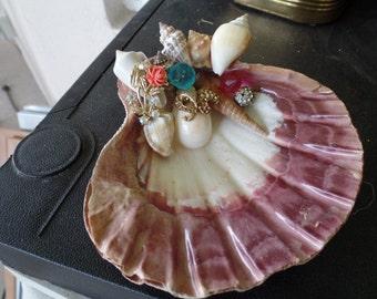 Custom Shell Dish