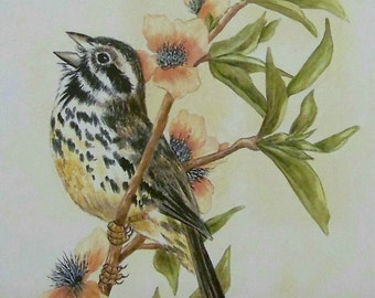 Chipping Sparrow Singing Realistic watercolor bird painting