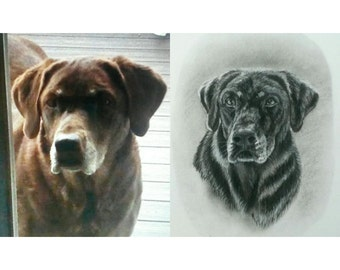 Custom Charcoal Pet Portrait