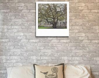 """Custom Polaroid Style Cotton Canvas Print with Copyright Photograph of Dublin - """"The Trinity Tree"""", 3 sizes available,  Custom Decor Idea"""