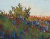 Red POPPIES at sunset Original PASTEL Painting Karen Margulis 5x7