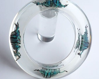 Transparent lucite bangle with real exotic beetles