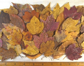 74 Fall Leaves Pressed, Dried Leaves, Gold Red Brown Leaves, Medium Size Leaves, Fall Craft Supply Embellishment, Fall Wedding Table Decor