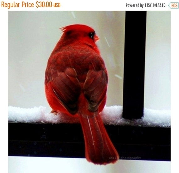 40% OFF SALE Red Cardinal Picture Christmas Cardinal Print Red Bird Photography - Home Decor - Fine Art Photography 8x8 Inch Print Cardinal