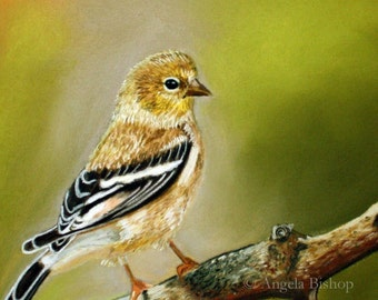 Gold Finch Painting Print, Bird, Nature, Pastel, Realism, 5 x 7, Giclee, Wildlife, Welcome Spring, Fine Art, Painting Print, Home Decor