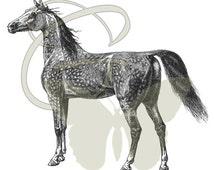 Horse Digital Download Illustration Animal Image Printable Clip Art 197