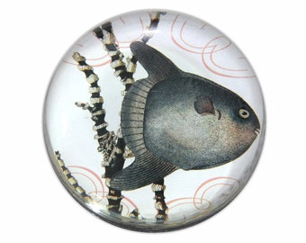 Fred the Fish Round Glass Paperweight