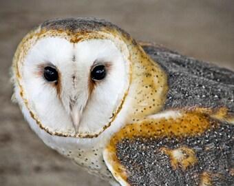 Barn Owl Fine Art Print - Nature, Botanical, Wildlife, Garden, Nursery Decor, Home Decor, Baby, Zen, Gift
