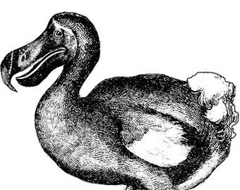 dodo bird animal clipart png clip art digital image download wild life graphics digi stamp digital stamp birds art printables